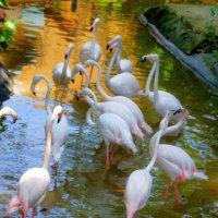 Фламинго. :: Лариса Борисова