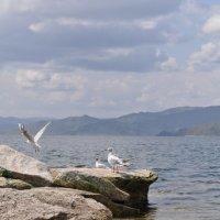 Чайки :: Екатерина Мещерякова