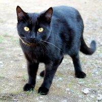 Cat :: Arina Kekshoeva