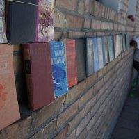 Абрикос в Узбекистане :: Антон Райхштат
