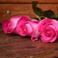 Просто цветы :: Ирина Юдина
