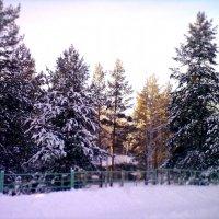 Карагайка :: Юлия Калунина