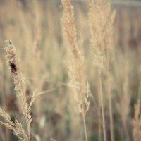 Осень наступает :: Надежда Рейман