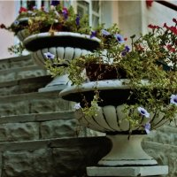 Flowers... :: natalia nataria