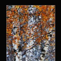 Осень :: Павел Сухоребриков