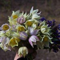 Воспоминания о весне :: Денис Занкин