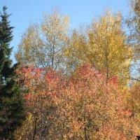 Все краски Осени... :: Снежанна Снежка