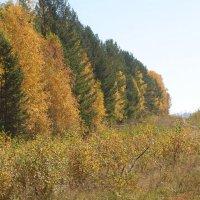 Лес Осенью :: Снежанна Снежка