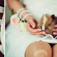 Кролик :: Жанна Нагорская