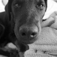 собака :: Денис Шевцов
