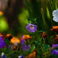 Цветочное :: Андрей Селиванов