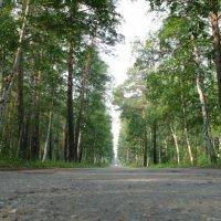 Дорога в лесу :: Евгений Колёс