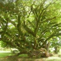 Дерево из сна :: Андрей Чернышов