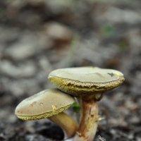 грибы :: Александр Савин