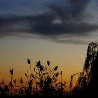 Последние краски дня :: KseSha Шевелева