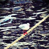 птиц :: Raf Ioksha