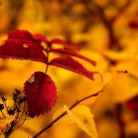 Осень :: Анна Чанцева (Корнакова)