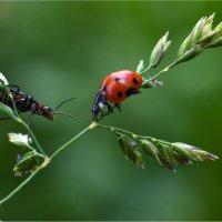 Из жизни насекомых 1 :: Николай Бабухин