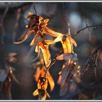 Осенний луч :: Валентин Цапков