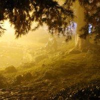 Туман :: Александр Бреза