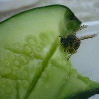 А осы тоже любят огурцы :: ИРИШКА КАЗАКОВА