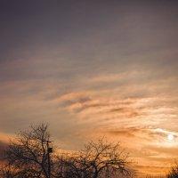 ноябрьский закат...птицы полетели на юг :: Tanja S.