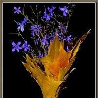 Осенний букет :: Dobr