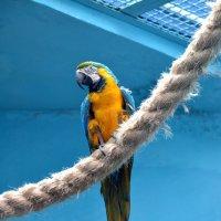 Ты попробуй угадай, что нам скажет попугай? :: Борис Русаков