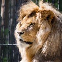 царь, просто царь :: Beasta