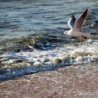 Азовское море :: Оксана Климова