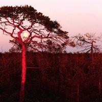 Луна запуталась в ветвях.... :: Алексей Хаустов