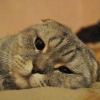 Кто меня разбудил? :: Ксения Юферева