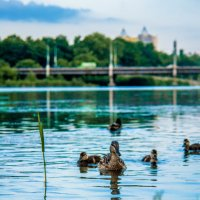 городская река :: Сергей Боровков