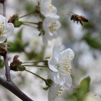 Весна :: Евгения Пимченко