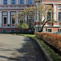 Бонсай-переросток :: ирина )))