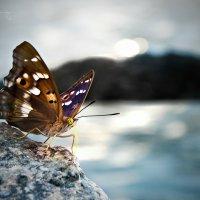Бабочка :: Vita Ilitlay