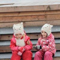 Котята на коньках :: Дмитрий Сушкин