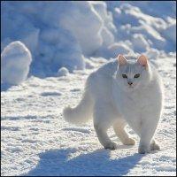 Кот белый :: Василий Микульский