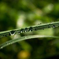 После дождя... :: Любовь Анищенко