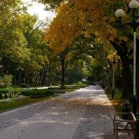 Городской парк :: Serega Денисенко