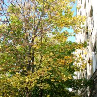 Осень в родном городе :: Светлана Попова