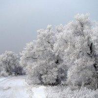 Зима  как  зима. :: Vlad Borschev