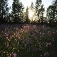 природа :: Александр 6769