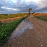 Август, после дождя. :: Юрий Бондер