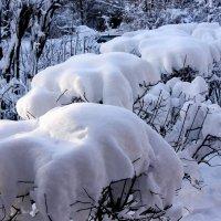 Первый снег :: Владимир Буравкин