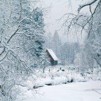 снежно.. :: зоя полянская