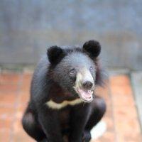 медвед :: Юлия Фисюк
