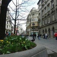 Весенний Белград :: Виктор Лукашенко