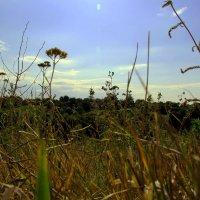 Морынци :: ViP_ Photographer