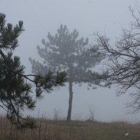 туман :: Игорь Kуленко